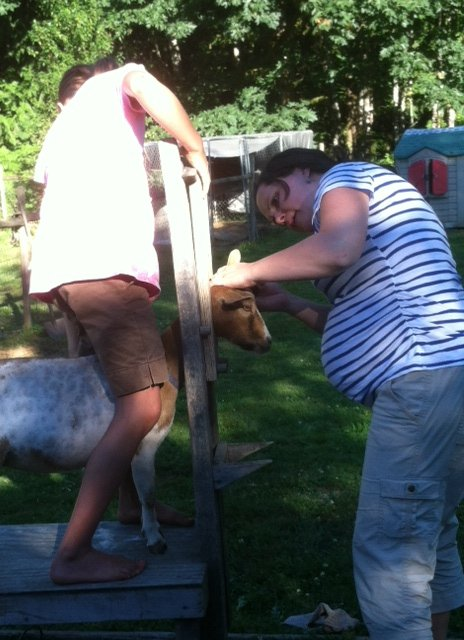 "I almost deemed myself ""too pregnant"" to learn this new skill, but it worked out that I needed to go for it.  So, belly and all, we clipped the goats, just in time for fair."
