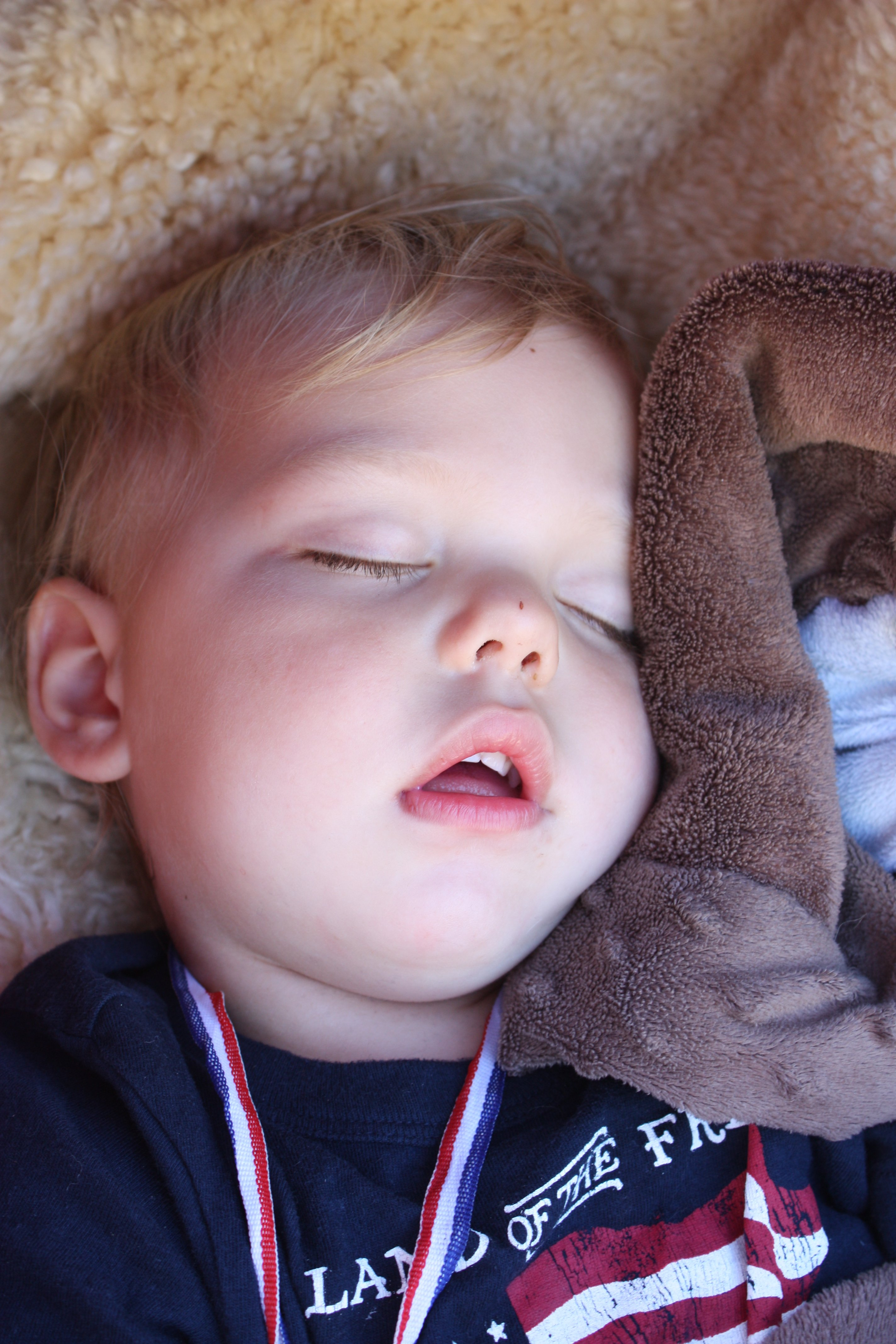 taking a snooze wearing his show ribbon - hard work wrangling goats when you're two!