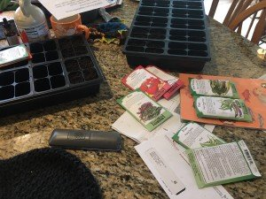 "I gave them a budget and a seed catalog and they checked the mail every day for a week anticipating ""seed day""!"